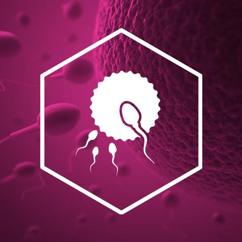 SternVitamin entwickelt Premixe fuer schwangere und stillende Muetter.